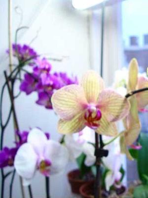 6 perles fertilisantes pour orchidées